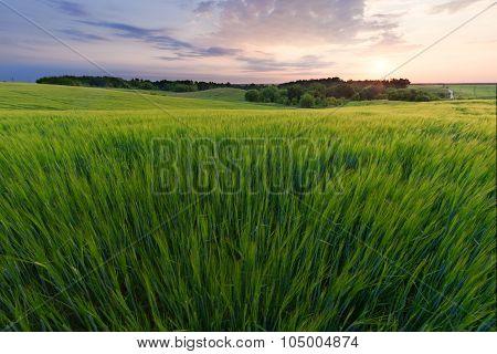 Sunrise In The Field