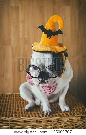 Portrait Of Dog In Disguise For Halloween