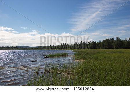 Marshy coast of the northern lake.
