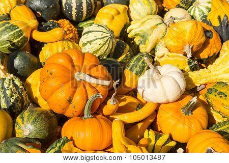 Gourds Pile