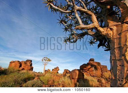 Köcher Baum Landschaft