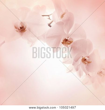 Pink delicate Background With Orchid Flowers