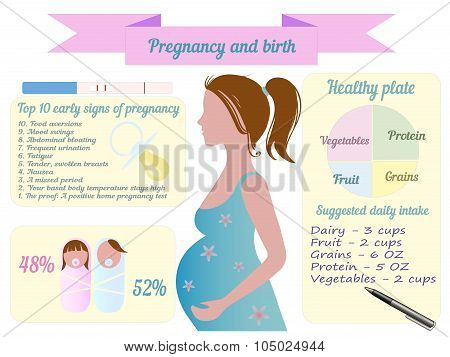 Pregnancy trimester infographic vector