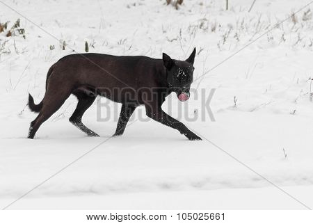 Stray dog being on hunting stage