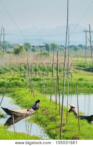 Two farmer working from boat at floating garden