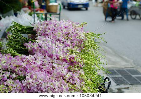 Dendrobium  Pompadour In Flower Market, Thailand