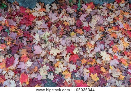 Autumn Leaves Closeup 3