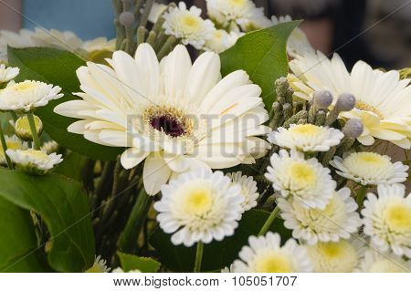 Bouquet of white Gerbera flowers  daisy Camomiles