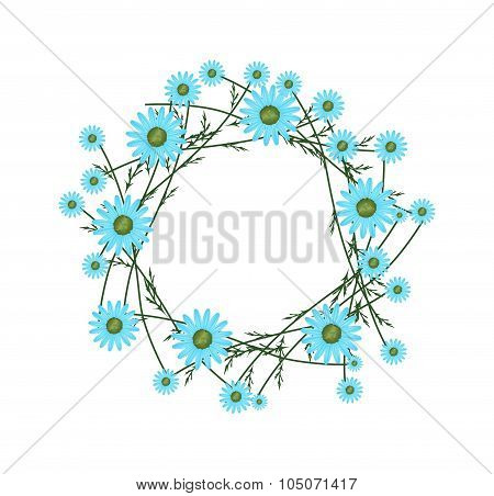 Beautiful Light Blue Daisy Wreath on White Background