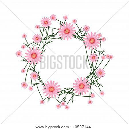 Beautiful Old Rose Daisy Wreath on White Background