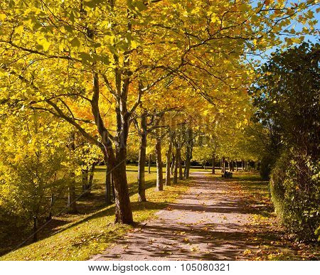 Pedestrian Walkway For Exercise Lined Up With Beautiful Tall Trees, In Autumn Team