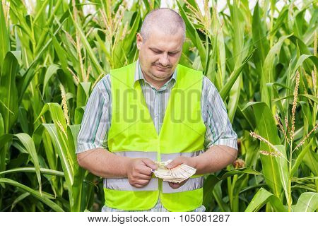 Farmer counting money on corn field