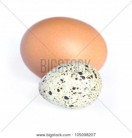 Quail and hen eggs