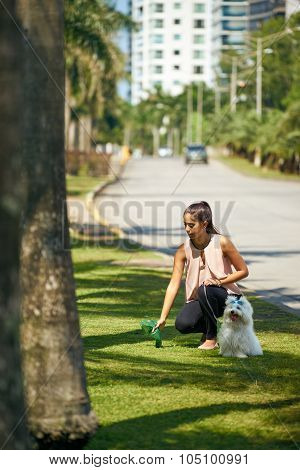 Woman Cleaning Droppings Of Her French Poodle Dog