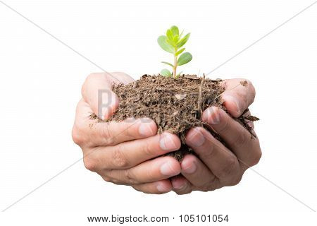 Sapling In Front Hands Isolate