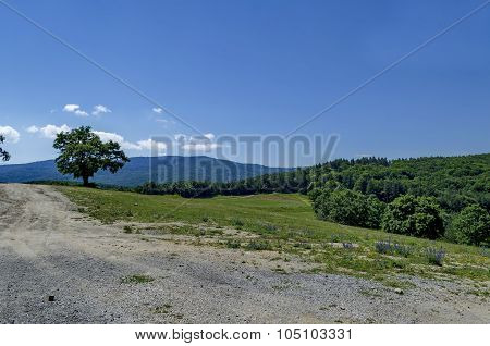 Green tree in the glade with blue sky and fresh forest