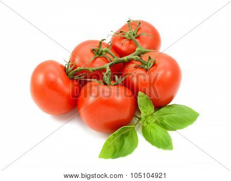 Tomatoes On The Vine With Fresh Basil Leaves