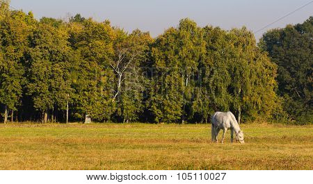 White horse with a foal grazing grass.