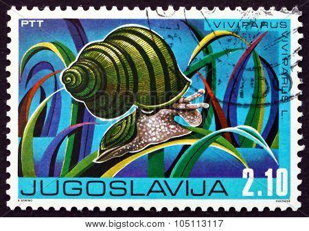 Postage Stamp Yugoslavia 1976 Freshwater Snail