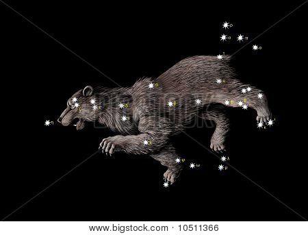 O grande urso (Ursa maior)