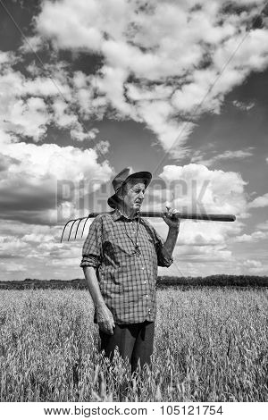 Old Man In Oat Field