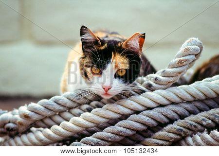 Barnyard cat resting in coiled rope