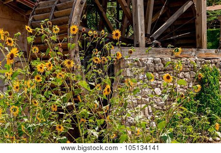 Grist Mill and Sunflowers
