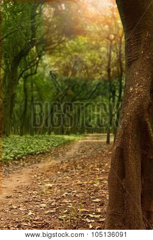 Forest Path in Chapultepec Park Mexico