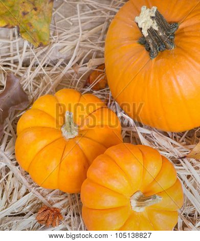 Colorful Fall Pumpkins