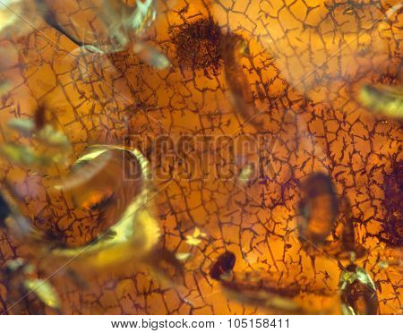 macro of amber