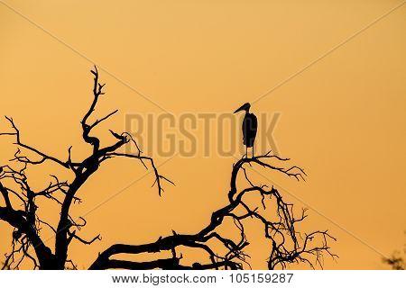 Marabou Sunset