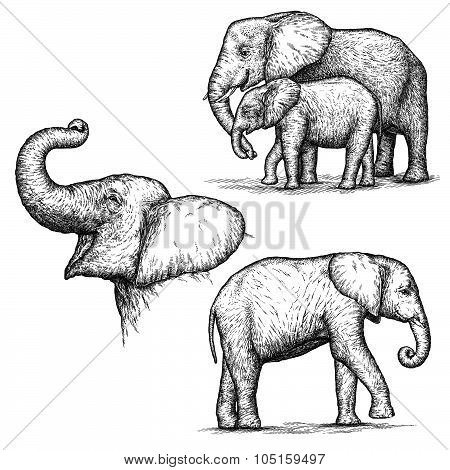 engrave elephant illustration