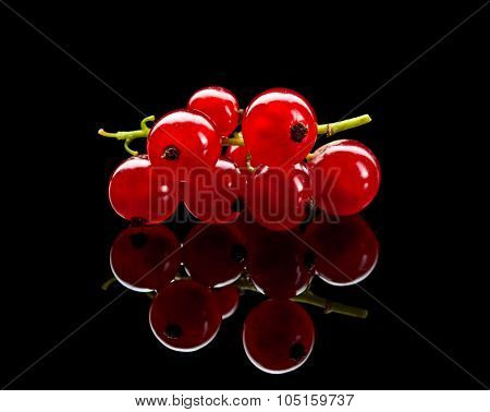 Bunch Of Red Currant Berry