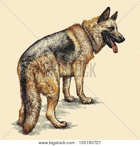 engrave dog illustration