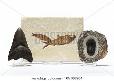 Fossils Collection
