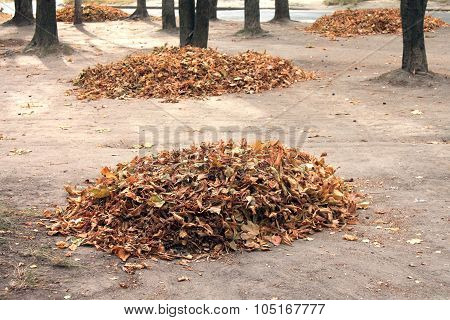 heap of dry leaves in autumn time