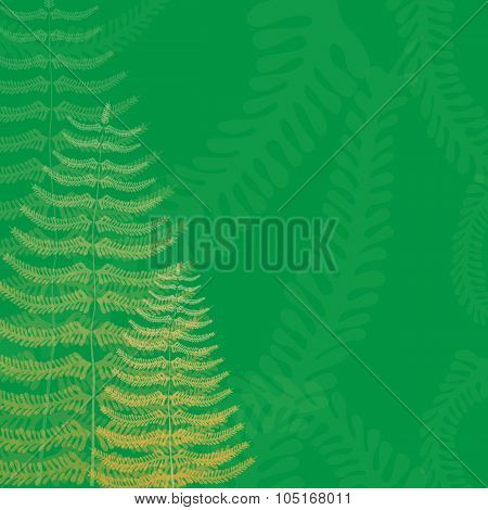 Floral Background With Fern Fronds