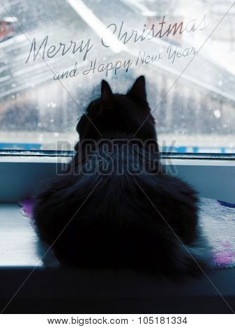 Fluffy black cat watching the snow - Christmas and New Year
