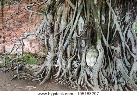 Buddha head sand stone in tree roots (Ayuthya, Thailand)