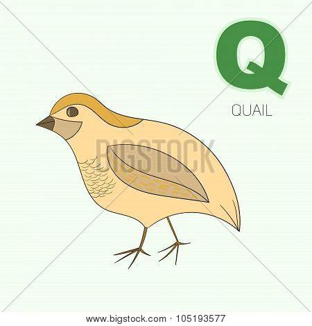 Alphabet letter Q quail children