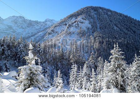 Snow Covererd Trees