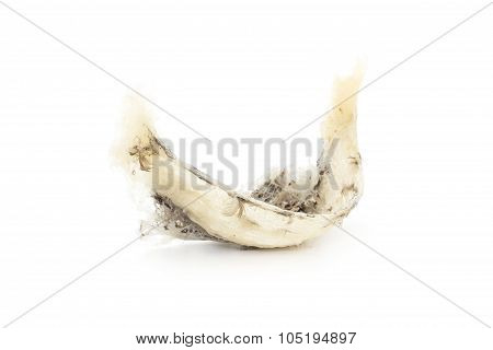 swallow birdnest isolated on white background
