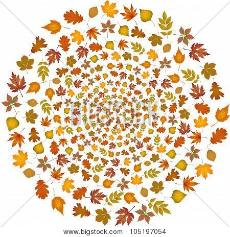 Set of autumn leaves flying in circle