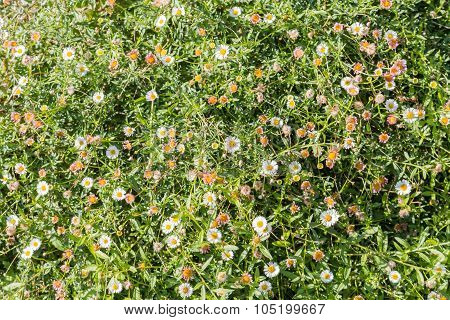 Colorful Small Flowers Pattern Background In The Spring
