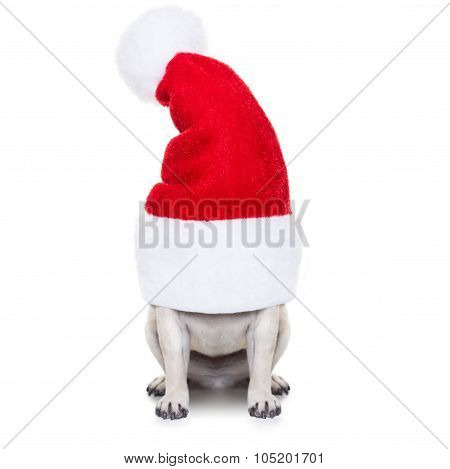 Christmas Dog And Santa Claus