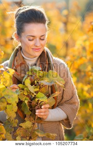Relaxed Woman Winegrower Standing Among Grape Vines In Vineyard