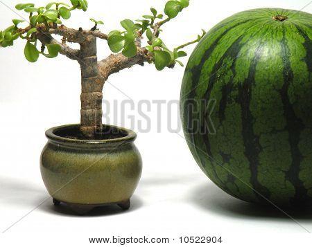 Sweet Melon