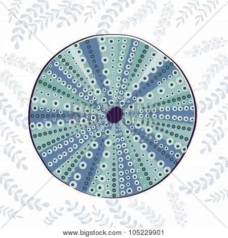 Sea urchin colorful illustration