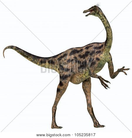 Gallimimus On White