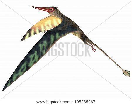 Rhamphorhynchus Jurassic Pterosaur